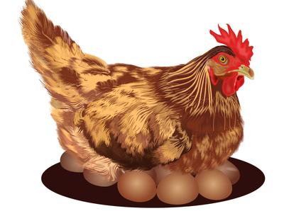 Mother Hen illustratorart print artwork art trend realistic animals chicken love egg graphic design illustrator vector illustration