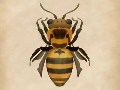 Watercolour bee skillshare watercolour watercolor bee procreate illustration