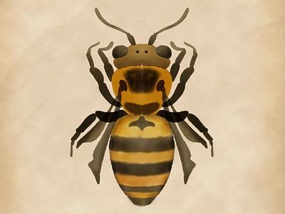 Watercolour bee skillshare watercolour watercolor bee procreate illustration