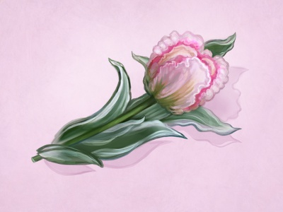 Spring Flower 2 photoshop painting illustration icon handmade hand drawn flowers drawing digital painting design pink art