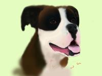 Rocky the Dog 3