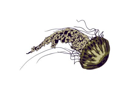 UNDER THE SEA editorial illustration editorial art creature creative nature sea ocean jellyfish digital magazine editorial digital art illustrator artwork illustration vector