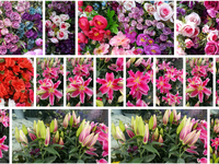 flower background photos images