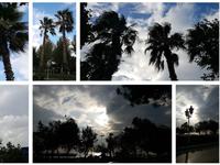 sunshine palm beach stock images