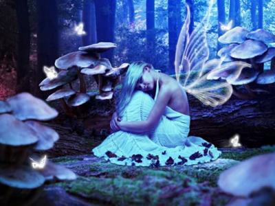 Night of the Butterflies