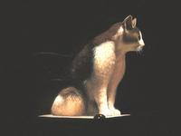 Cat - Painting @ 2002
