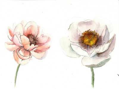 Watercolor Flowers watercolor illustration floral aquarelle hello dribble giveaway firstshot hand drawn flowers watercolour paint design watercolors illustration
