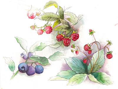 Sweet Berries watercolor paint branding watercolour watercolors art watercolor illustration illustration floral flowers aquarelle