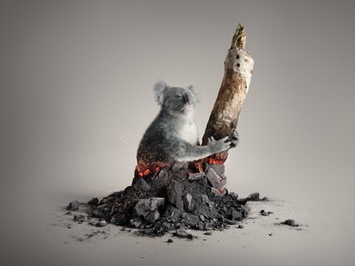 WWF - Australia photogrammetry coal fur blaze fire koala australia b3d blender3d blender advertising shading cgart 3d art photoshop lighting cgi illustration cg 3d