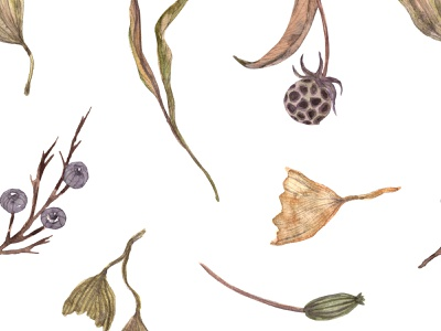Watercolor seamless pattern whith herbs, berries, gingko summer herbs seed green elegant eucalyptus botanical boho logo flower watercolor textile print illustration fabric digital paper