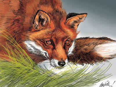 charlieFox illustration