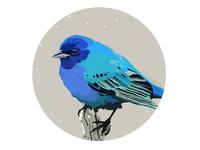 Winter Birds - blue