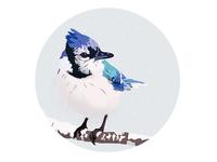 Winter Birds - White