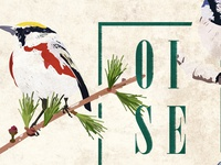 Winter birds poster