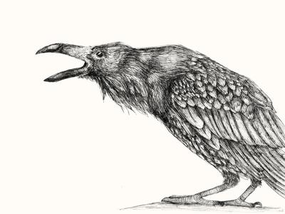 Raven Study artwork drawing animal bird raven micron pen ink study spot illustration ink illustration traditional illustration illustration