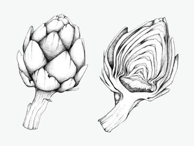 Artichoke Study : Ink