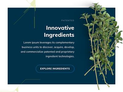 Ingredients typography nutrients vitamins ingredients plants