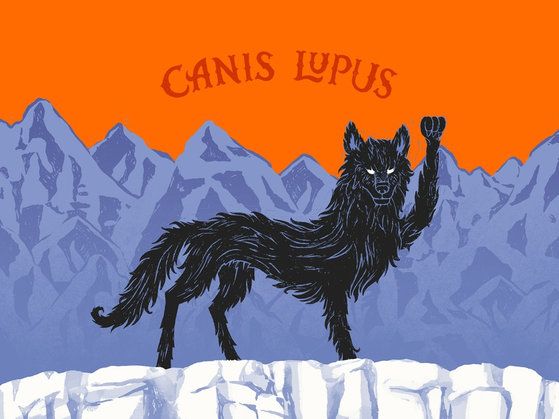 Canis Lupus Update scene mountain lettering wolf wes anderson