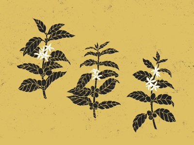 Coffee Plant Illustrations natural organic kraft flowers plant botanic coffee solid simple black and white drawing