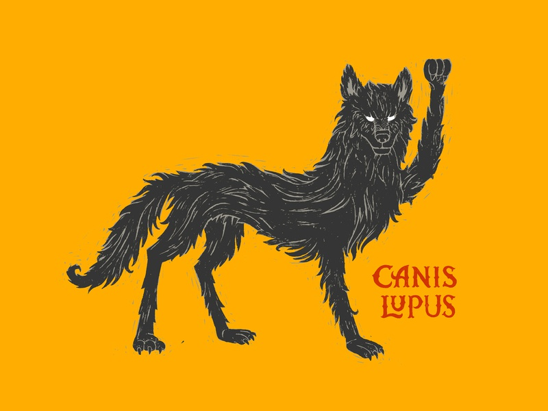 Canis Lupus canis lupus drawing rough illustration latin wolf wild lettering
