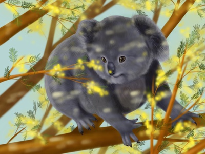 Koala on the tree of mimosa animals illustrated animals illustration digital painting digital illustration digital art digitalart digital art animal art