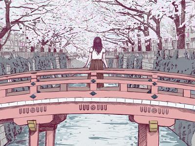 Japan Cherry Blossoms japanese cherry cherry blossom cherryblossom japan