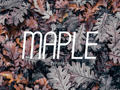 Maple typeface hand lettering sans serif serif script holdendesignco retro deals otf ttf type typeface font