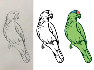 WIP parrot beach california birds tropical bird illustration vector illustration parrot