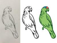 WIP parrot