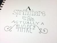 Springhare