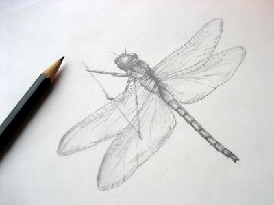 #2 Dragonfly