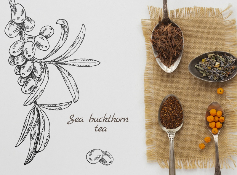 sea buckthorn plant pen and ink art paper inspiration texture tea package berries dribble pencil pen ink scetch hand drawn lines illustration