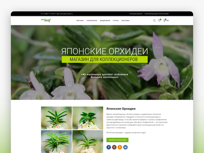 Sunleaf - Rare Japanese Neofinetias E-commerce Site webdesign design logo custom wordpress theme web design idsn ui design ecommerce wordpress orchid shop japanese orchid neofinetia