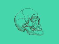 Skull on Shamrock
