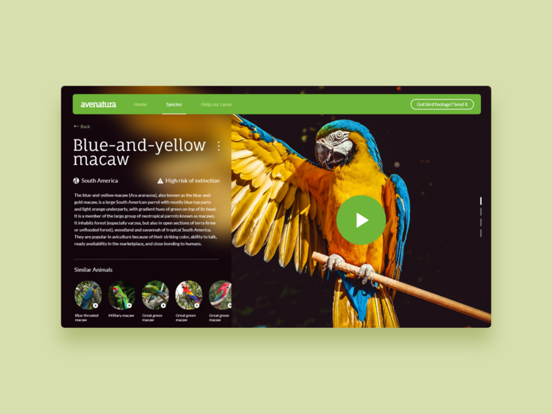 Avenatura - UI Concept 14 minimalism blurry blur colorful green macaw birds zoo animals website interface ui ux user interface interface designer design ui design interface design