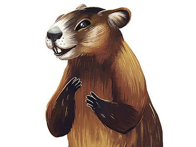 Groundhog woodchuck rodent groundhog wildlife animal illustration