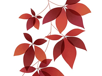 Virginia Creeper red leaves ivy plant virginia botanical illustration