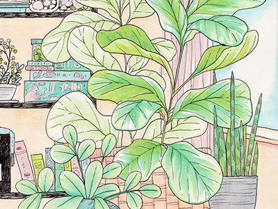 Plant Shelfie drawing traditional markers copics ink fiddle leaf fig fig plants houseplants illustration