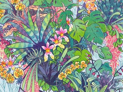 Epiphytes tropical plants foliage leaves drawing orchids nature illustration