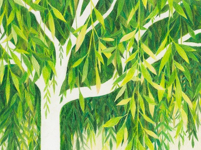 Green Willow plants foliage leaves tree prismacolor green traditional drawing colored pencil nature illustration
