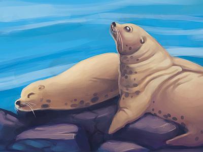 Sea Lions WIP illustration sea lions animals