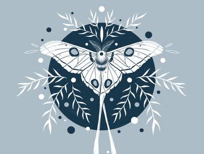 Comet Moth procreate nature illustrator illustration