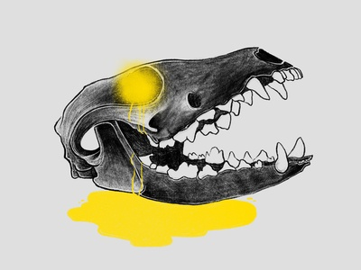 Fox Skull illustration