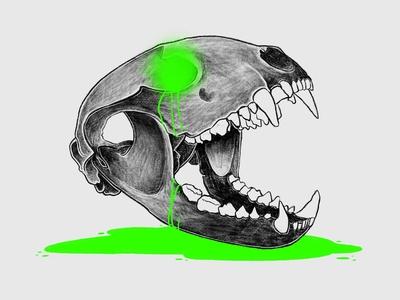 Bobcat Skull Illustration