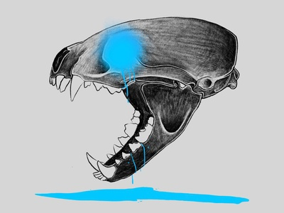 Badger Skull Illustration