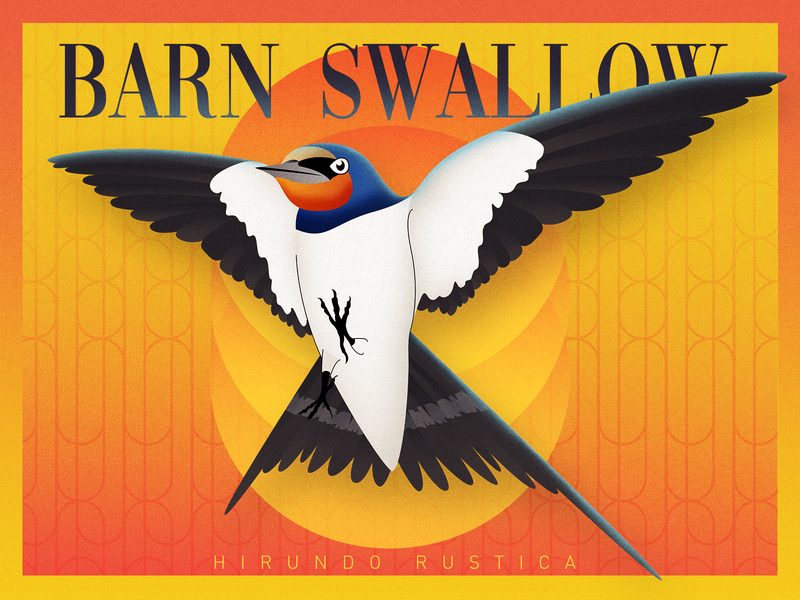 Barn swallow wings flight warm spring illustration bird