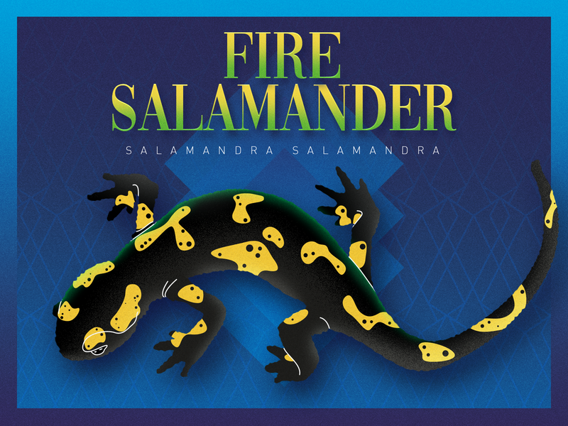 Fire Salamander animals wild yellow black reptile salamander illustration