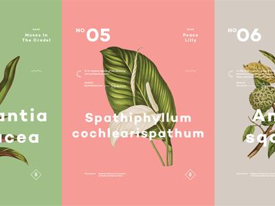 Plants (Pt.02)