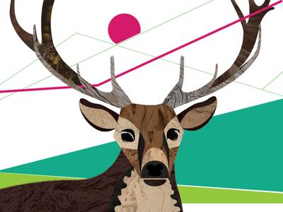 Elk Collage for Work mountains boulder elk collage
