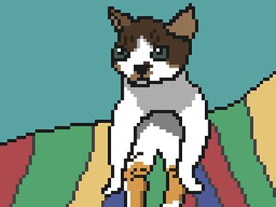 Pixel Art Poor Cat art cute illustration drawing cat 8bit pixel art pixelart